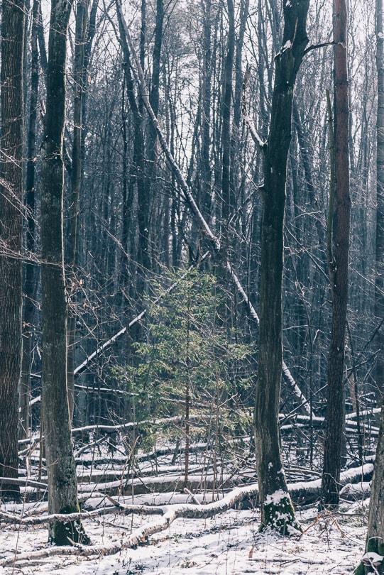 Las Zwierzyniecki w Białymstoku | Podlasie | GreenPixPartner