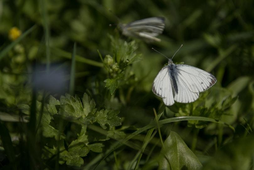 Podlasie | Majówka na wsi | Green Pix Partner